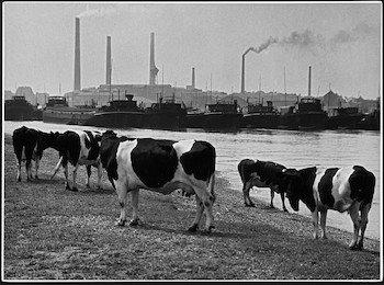 Ruhrgebietsfotografien von Albert Renger-Patzsch im Ruhr Museum
