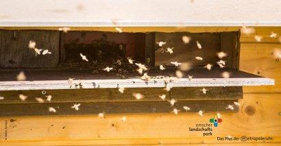 Was Sie schon immer über Bienen wissen wollten
