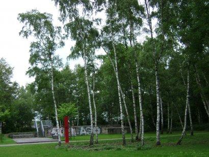 abgesagt_Wildkräuterwanderung im Gleispark Frintrop
