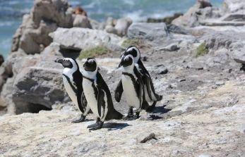 Bau einer neuen Pinguinanlage in der ZOOM Erlebniswelt