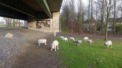 Emscher-Galerie / Weidende Schafe