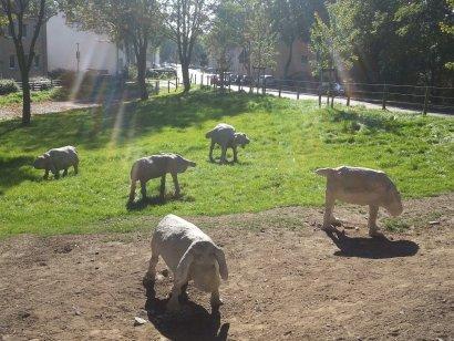 Emscher-Galerie / Weidende Schafe Darstellung 2